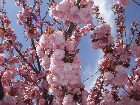 May_11_2008_048_4